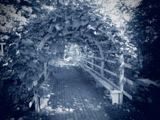 OSV - Grape Arbor